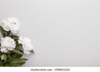 Fresh white peony flowers on light gray table background. Empty place for emotional, sentimental text, quote or sayings. Closeup.