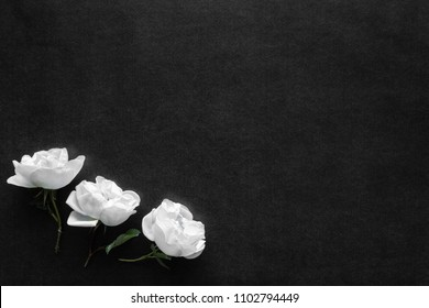 Fresh white roses on the black, dark background. Condolence card. Empty place for emotional, sentimental text or quote.