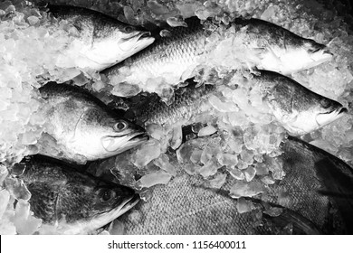 Black And White Snapper
