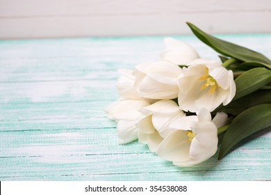Fresh white tulips  on turquoise painted planks against white wall. Selective focus. Place for text.