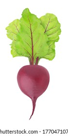 Fresh whole beet with leaves isolated on a white background. Clip art image for package design.