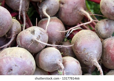 Fresh whole beets roots in a bunch