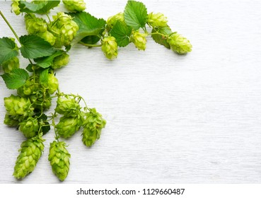 Fresh whole hops on white wooden table. Green Blossoming hops with green leaves close up over white background. Beer ingredients. Border, flame. Beer brewery concept. Alternative medicine. Flatlay