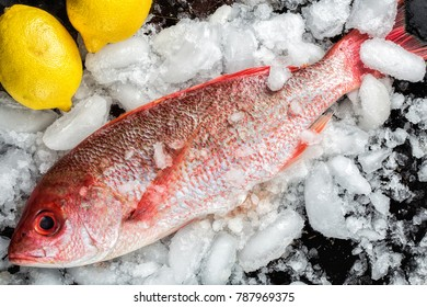 Fresh whole red snapper on ice