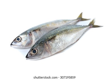 Image result for fish edible