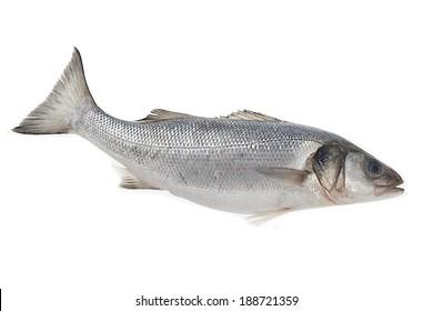 Fresh whole sea-bass isolated on white