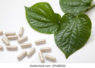Fresh wild betel Leaf bush or piper sarmentosum roxb with herbal drug capsule on white background