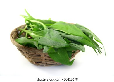 fresh wild garlic leaves in a basket on a white background