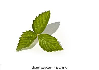 fresh wild strawberry green leaf