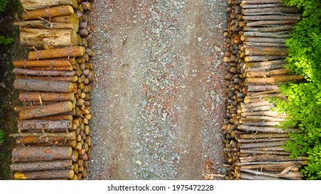 Fresh wood cut and lined in the forest - Shutterstock ID 1975472228