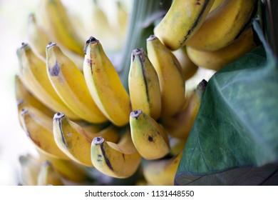 Fresh yellow banana tropical fruit for Javanese culture ceremonial