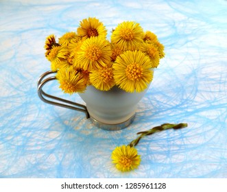 Fresh yellow colts foot (tussilago farfara) flowers in cup on canvas background. Glass mug with first spring flowers on light blurred background. Close-up