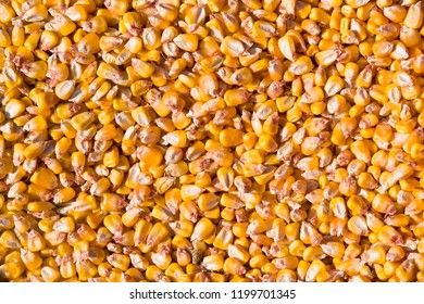 Fresh yellow corn grains