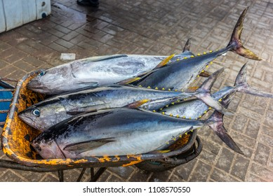 Fresh yellow fin tuna catch at the fish market in Muscat - 1