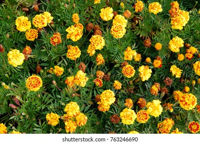 Fresh Yellow Flowers and Dry Flowers in the gardens