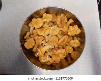 Fresh yellow mushrooms chanterelle in a metal bowl
