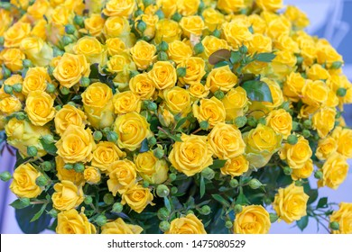 Fresh yellow roses bouquet flower background. Surface of yellow beautiful roses in drops of dew. Background of roses. Screensaver, postcard