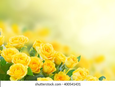 Yellow Roses Background Images Stock Photos Amp Vectors