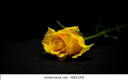 Yellow Rose Black Background Images Stock Photos Vectors Shutterstock