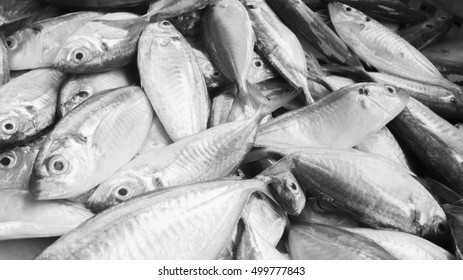 fresh yellow stripe trevally fish  from  photo black and white picture