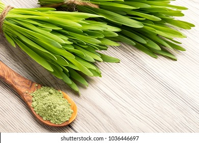 Fresh young barley grass with green barley grass powder and copy space