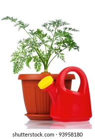Fresh young carrot in plastic pot over a white background