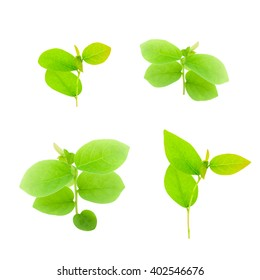 Fresh young green plant and leaf isolated on white background