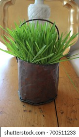 Fresh young intense bright green wheat grass growing in an old battered antique handmade copper pail bucket on top of an old antique pine table Shabby Chic decor home