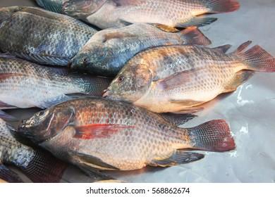 Fresh yummy nile tilapia in fish market