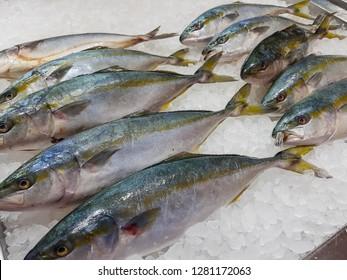 Fresh-caught,yellowtail on ice at market