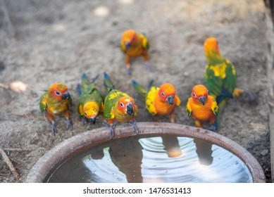 Fresh-colored parrots drink water in tropical nature.