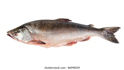Fresh-frozen fish pink salmon. Isolated on white background