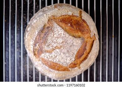Freshly baked artisan sourdough bread on a rack