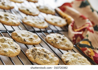 Freshly baked hot chocolate chip cookies are placed on baking racks to cool off before storing. Homemade chocolate chip cookies are a favorite dessert and special treat for many people.