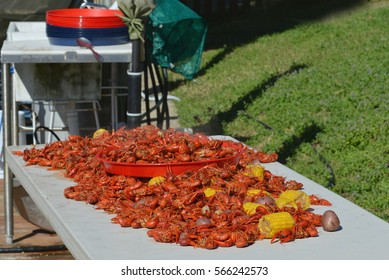 Freshly boiled hot Louisiana crawfish spread on outdoor table with potatoes and corn on the cob.