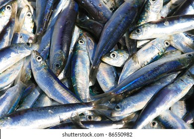 Freshly catch sardines, anchovies, reflecting in the sun