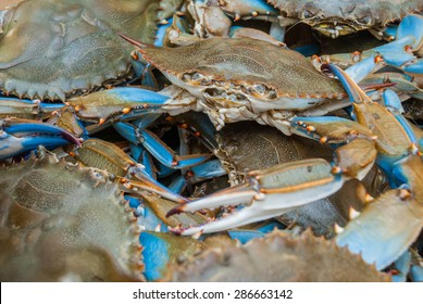 Freshly Caught Blue Crabs