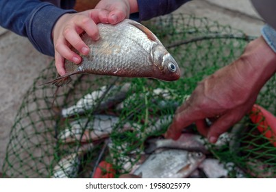 Freshly caught fish in the net hand man boy