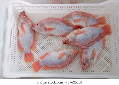 freshly caught fish Tilapia in a drawer