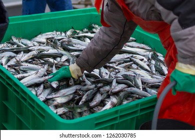 freshly caught fish is unloaded from a fishing boat in fish boxes