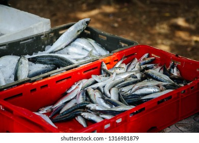 freshly caught fishes sardines in boxes