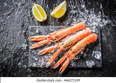 Freshly caught langoustines on ice