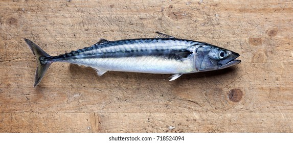 Freshly caught single mackerel on cutting board. Photo from above, daylight