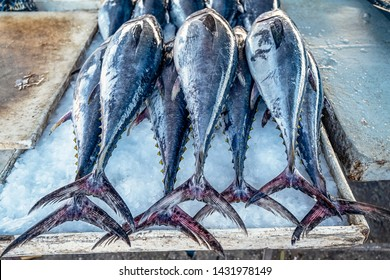 Freshly caught tuna на рибному базарі в Bandar Abbas, Iran