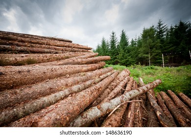Freshly chopped tree logs stacked up on top of each other in a pile