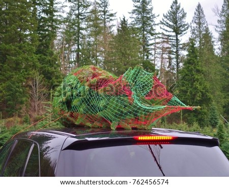 A freshly cut Christmas tree on a farm in Washington state now wrapped by a  baler - Freshly Cut Christmas Tree On Farm Stock Photo (Edit Now) 762456574