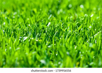 freshly cut grass, macro low angle shot with selective focus