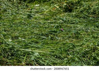 freshly cut grass in the meadow