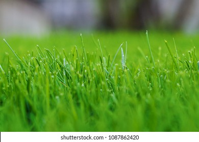 Freshly cut grass on the green lawn of the training football field