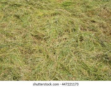 Freshly cut long grass close up.